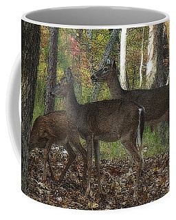Coffee Mug featuring the photograph Deer In Forest by Lydia Holly