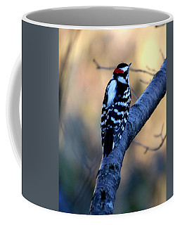 Coffee Mug featuring the photograph Downy Woodpecker by Elizabeth Winter
