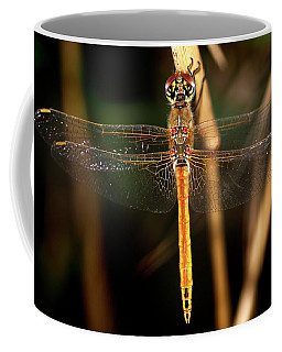 Coffee Mug featuring the photograph Dragon Fly 1 by Pedro Cardona