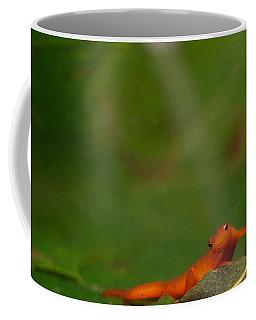 Easterm Newt Nnotophthalmus Viridescens 18 Coffee Mug