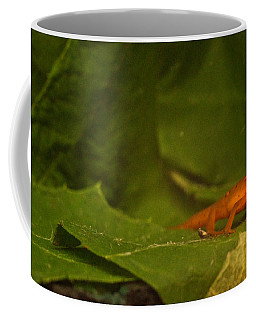 Easterm Newt Nnotophthalmus Viridescens 4 Coffee Mug