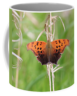 Coffee Mug featuring the photograph Eastern Comma Butterfly by Penny Meyers