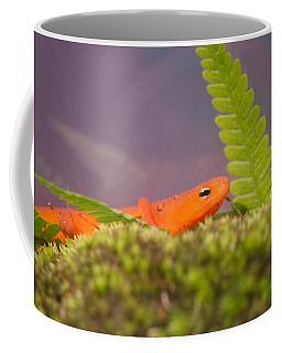 Eastern Newt Notophthalmus Viridescens 3 Coffee Mug