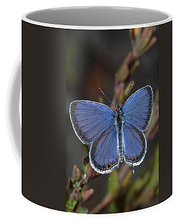 Eastern Tailed Blue Butterfly Coffee Mug
