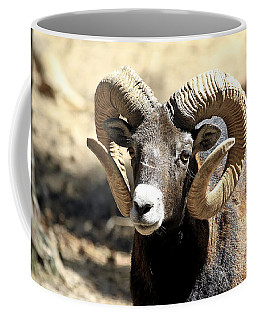 European Big Horn - Mouflon Ram Coffee Mug