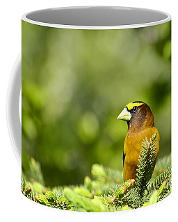 Evening Grosbeak Coffee Mug by Teresa Zieba