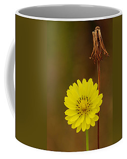False Dandelion Flower With Wilted Fruit Coffee Mug