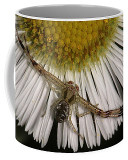 Flower Spider On Fleabane Coffee Mug