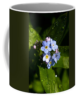 Forget Me Not Coffee Mug by Ralph A  Ledergerber-Photography