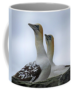 Coffee Mug featuring the photograph Gannets by Lynn Bolt