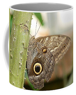 Coffee Mug featuring the photograph Giant Owl Butterfly by Lynn Bolt