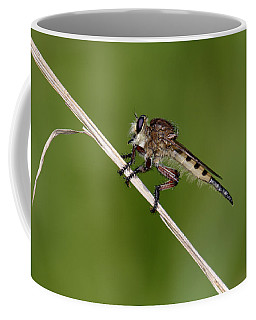 Giant Robber Fly - Promachus Hinei Coffee Mug