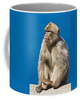 Gibraltar Barbary Macaque Macaca Coffee Mug