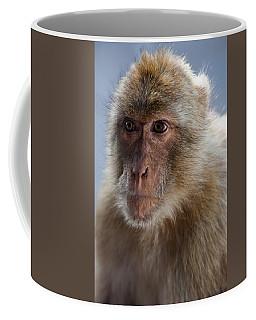 Gibraltar Macaque Portrait Coffee Mug
