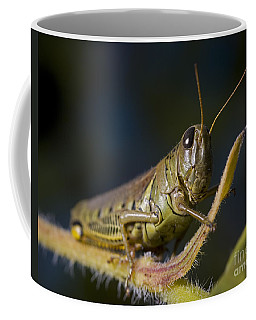 Coffee Mug featuring the photograph Grasshopper by Art Whitton