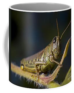 Grasshopper Coffee Mug by Art Whitton