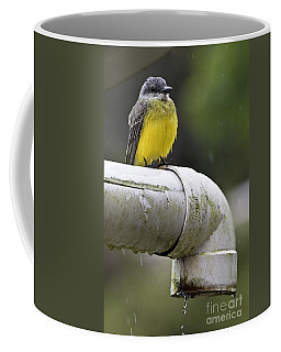Grey-capped Flycatcher Coffee Mug