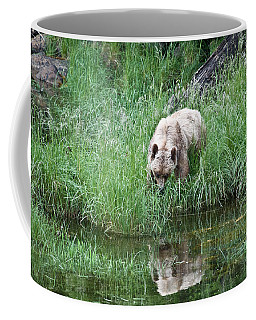Grizzly Bear And Reflection On Prince Rupert Island Canada 2209 Coffee Mug