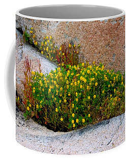 Growing In The Cracks Coffee Mug by Brent L Ander