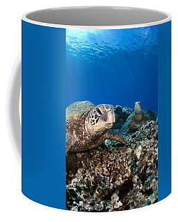 Hawaiian Turtle On Pacific Reef Coffee Mug