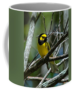 Coffee Mug featuring the photograph Hooded Warbler Dsb166  by Gerry Gantt