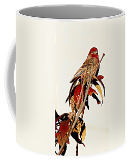 Coffee Mug featuring the photograph House Finch Perch by Elizabeth Winter
