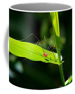 Itsy Bitsy Spider Coffee Mug