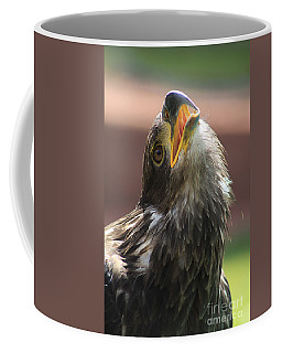 Coffee Mug featuring the photograph Juvenile Bald Eagle by Alyce Taylor