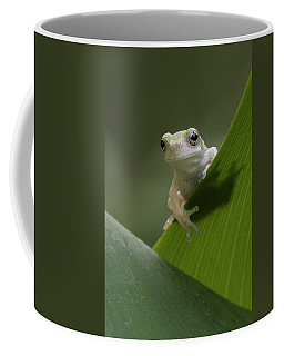 Juvenile Grey Treefrog Coffee Mug
