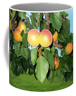 Coffee Mug featuring the photograph Lake Country Apricots by Will Borden