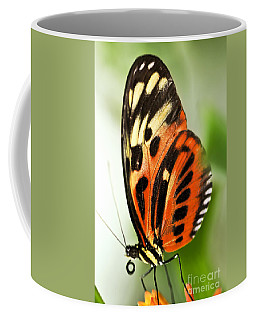 Large Tiger Butterfly Coffee Mug