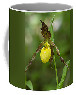 Large Yellow Lady Slipper Orchid Dspf0251 Coffee Mug