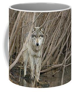 Looking Wild Coffee Mug