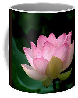 Lotus Beauty--blushing Dl003 Coffee Mug