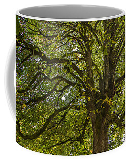 Majestic Tree Coffee Mug