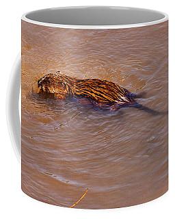 Muskrat Swiming Coffee Mug