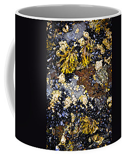 Mussels And Barnacles At Low Tide Coffee Mug