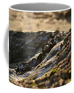 Mussels Sunset Coffee Mug
