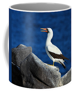 Nazca Booby Coffee Mug