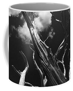 Coffee Mug featuring the photograph Old Tree by David Gleeson