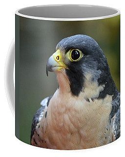 Peregrine Falcon Coffee Mug
