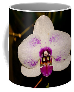 Coffee Mug featuring the photograph Phalaenopsis White Orchid by Tikvah's Hope