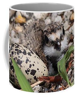 Killdeer Baby - Photo 25 Coffee Mug