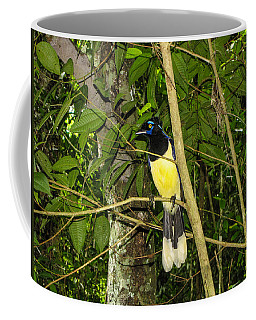 Coffee Mug featuring the photograph Plush-crested Jay by David Gleeson