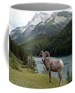 Portrait Of A Bighorn Sheep At Lake Minnewanka  Coffee Mug