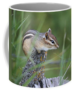 Coffee Mug featuring the photograph Portrait Of A Chipmunk by Penny Meyers