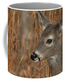 Portrait Of  Browsing Deer Coffee Mug