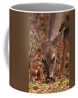 Portrait Of  Browsing Deer Two Coffee Mug