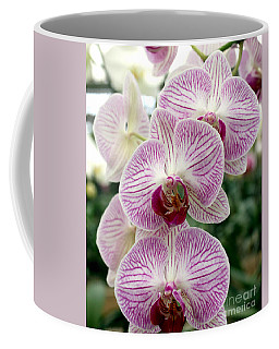 Coffee Mug featuring the photograph Purple Orchids by Debbie Hart