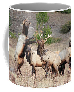 Put Up Your Dukes Coffee Mug